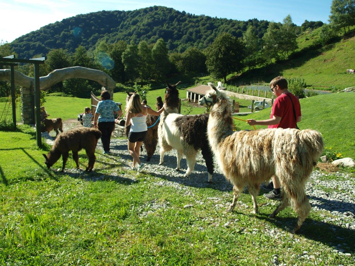 Walk with llamas