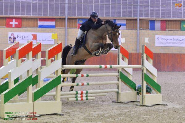 lolo horses cavallo