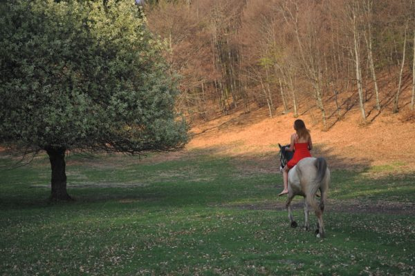lolo horses